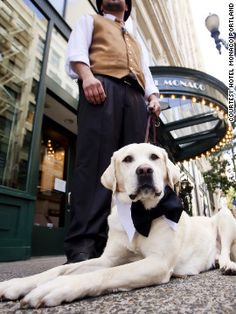 The Hotel Monaco in Portland has a pet psychic that's available during the daily wine hour.