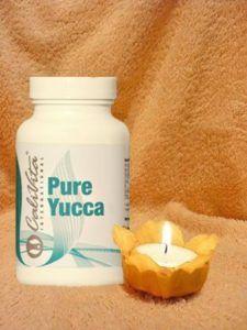pure-yucca-2078_jpg_290x600_q85