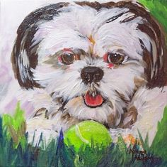 Shih Tzu Dog At Play, original painting by artist Norma Wilson | DailyPainters.com