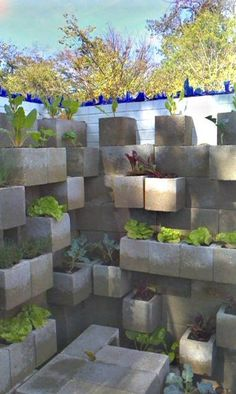 Cinder block wall/planter