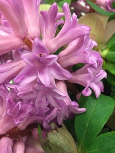 Hyacint Anna Liza @zoom