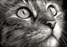 20   desenhos do gato realistas bonita para inspirá-lo