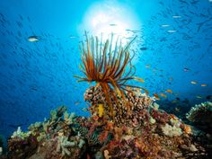 Experienced scuba divers know that there's no shortage of choice locations to explore underwater depths.