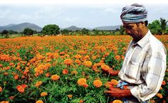 How Agriculture Startups Are Blossoming - KnowUrStartup