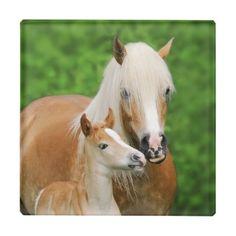 #photo - #Haflinger Horse Cute Baby Foal Kiss Mum Pony Photo Glass Coaster
