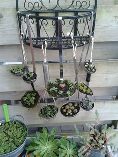 Garden - inspiration landscaping water features The Fire Blossom Saga Book 1 The House at Riverton A Novel ebook by Kate Morton Whispers Beyond The Veil a Change Of Fortune Mystery The Tea Planters Wife A Novel Dinah. Succulents In Containers, Succulents Garden, Easy Diy Projects, Garden Projects, Garden Ideas, Pink Geranium, Deco Floral, Front Yard Landscaping, Landscaping Ideas