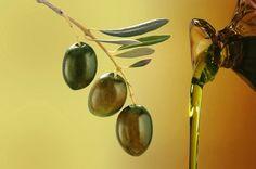 Olivenöl, das grüne Gold Istriens  http://www.istrien-pur.com/endlich-das-neue-olivenoel-aus-istrien-ist-da/