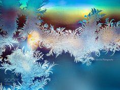 Fern Frost 16 by WeiSanOoi. @go4fotos