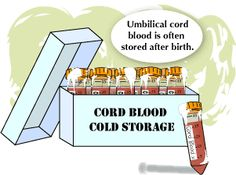 When a child is born, some blood remains in the placenta and umbilical cord. This blood is known as umbilical cord blood. This blood is very important to medical science as it contains hematopoietic stem cells which can form white blood cells, red blood cells and platelets. If extracted and stored in cord blood banks, it can be used later to treat cancer and other diseases related to the blood and immune system.