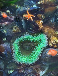 Sea anemone in rock