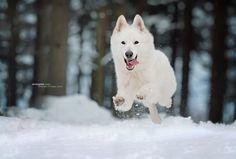 Flying dog by Anne Geier