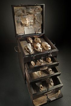 by ron pippin. i have a fixation on animal skulls and old antique taxidermy La Danse Macabre, Cabinet Of Curiosities, Assemblage Art, Memento Mori, Animal Skulls, Skull And Bones, Weird And Wonderful, Skull Art, Crane