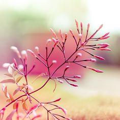 Pink Summer Flowers