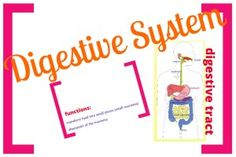 This amazing product will blow you away! Zoom in, zoom out and learn all about the digestive system! It can be used for all ages and it's the teacher that decides what can be explored and how exhaustive the explanations can be. Don't miss out on this one! You have never seen anything like this!