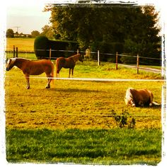 Schlafende Pferde - sleeping horses. Sooo viel Ruhe...