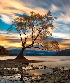The Color Surge - the most photographed tree in Wanaka, New Zealand Photo by: Danny Tan