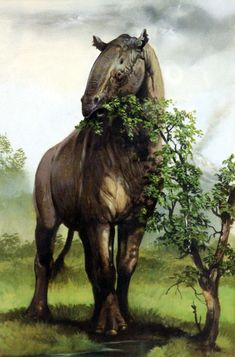 Paraceratherium is an extinct genus of gigantic hornless rhinoc-eros-like mammals endemic to Eurasia & Asia during the Oligocene epoch. It is regarded as the largest land mammal known, w/the largest species having an estimated mean adult mass of 12 tons. It was a browsing herbivorous perissodactyl that stripped leaves from trees. Info: Wikipedia