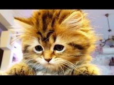 Kittens vs. Dancing Tail - Cute Little Furballs