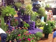 Garden display using pallets painted purple - offsetting the green plants.