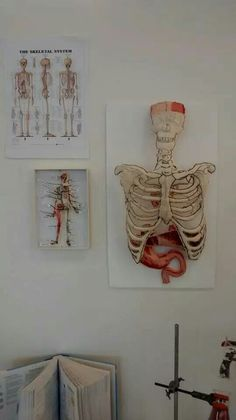 The amazing Anatomy exhibition -Bukky Jesusanmi