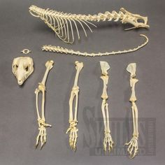 real bones - Google Search