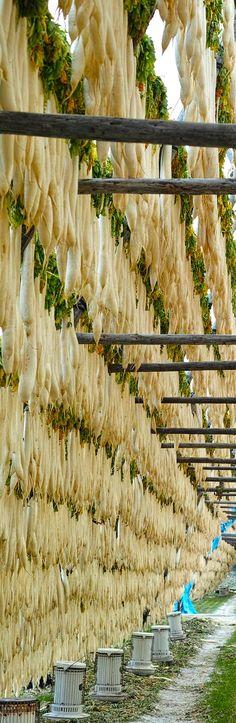 Drying daikon radish to be pickled, Miyazaki, Japan 宮崎市田野町の大根やぐらの宇宙