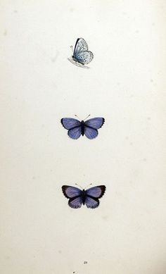 Butterfly Illustration by Vintage Collective