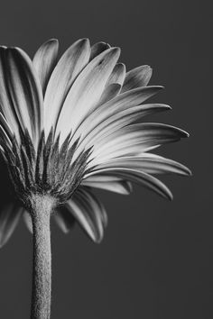 Improve Your Floral Photography with Creative Composition and Depth of Field