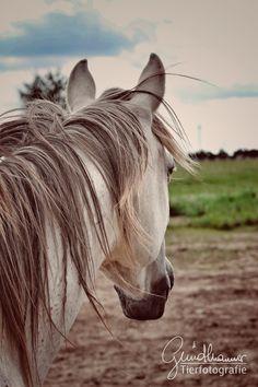 Oft schweifen unsere Blicke in die Weite, wir sehen in die Zukunft und werden immer schneller. Dabei ist der Moment, dass einzige das für uns greifbar nah ist. Etwas, dass Pferde ganz genau wissen und spüren. Wir sollten viel mehr im Moment sein, bei uns sein… #pferde #pferdefotografie Christian Girls, Horse Pictures, Moment, Community, Horses, Group, Board, Animals, Inspiration