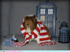 OH MY GOD!!! WHAT HAPPENED TO 4th DOCTOR?!!!