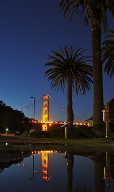 Golden Gate and Palms Reflected