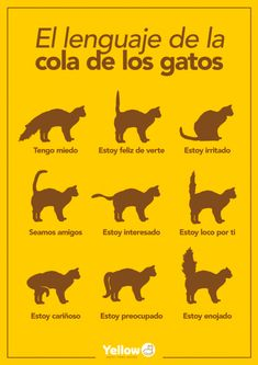 The feline body language: positions and movements of the tail - Yellow Hotel for Cats Cute Baby Animals, Animals And Pets, Funny Animals, Cute Kittens, Pet Shop, Cool Cats, Kawaii, Cat Lovers, Cute Babies