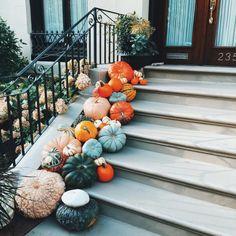 pumpkins and gourds @dcbarroso