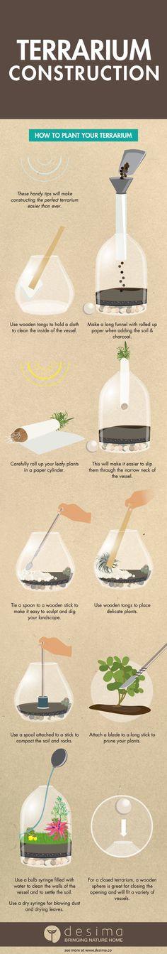 Terrarium Construction Infographic