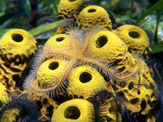 sea-sponge.jpg 580×435 pixels
