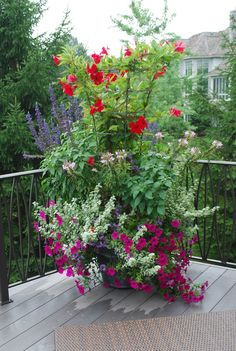 Add height to your mixed containers by having vines (like this red mandevilla) grow up a tomato cage.