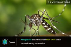 #insects #mosquito #facts