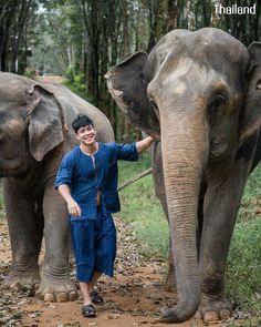 THAILAND 🇹🇭   All Elephant Home Phuket - ออลล์ เอลเลเฟ่นท์ โฮม ภูเก็ต