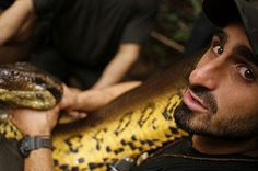 Wildlife expert set himself to be eaten by anaconda to film from inside