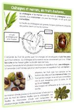 Fiche pour étudier marrons et châtaignes à l'automne