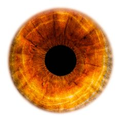 Windows to the Soul - Iris gallery by Fine Art Photographer Edouard Janssens. Background Wallpaper For Photoshop, Studio Background Images, Blue Background Images, Tiefling Paladin, Rare Eye Colors, Eye Texture, Amber Eyes, Crazy Eyes, Dragon Eye