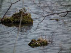 Turtles on an island.