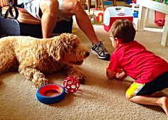Playing with my cousin.  Indy the Goldendoodle