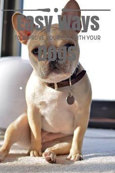 Advice Everyone Should Know About Caring For Dogs Pet Dogs, Dogs And Puppies, Pets, Dog Care Tips, Pet Care, Dog Training Tips, Dog Supplies, Four Legged, How To Stay Healthy