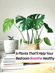 6 Bedroom Plants That'll Drastically Improve Your Health and Wellness - Everything Abode Best Plants For Bedroom, Bedroom Plants, Inside Plants, Cool Plants, Feng Shui, Best Air Purifying Plants, Air Cleaning Plants, Household Plants, Best Indoor Plants