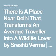 There Is A Place Near Delhi That Transforms An Average Traveller Into A Wildlife Lover by Sreshti Verma | Tripoto