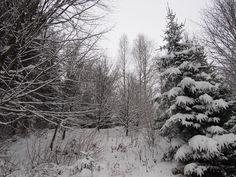 Nad Ostravicí, konečně sníh