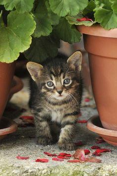 Little kitten in the garden ✿⊱╮
