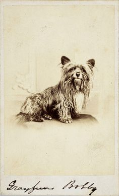 Greyfriars Bobby (photograph)  about 1865....Oh!! Looks like my Ophelia pup!  I miss her little ragamuffin face