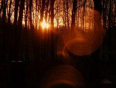 http://pinterest.com/sidekickvic/photography-i-love-from-365ers/